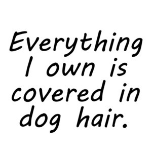 Everything I own is covered in dog hair. Funny dog t-shirt